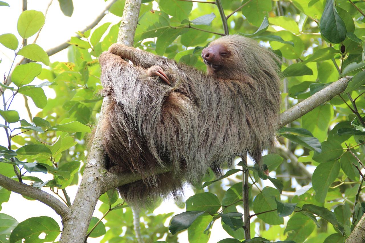 Costa, Rica