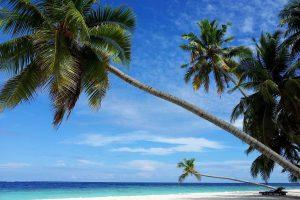 Maldives, Beach, Palm Trees, Island, Sea, Singles Holidays, Solo Travel, Singles Vacations, Individual Travel (Image: Berniefant, Pixabay)
