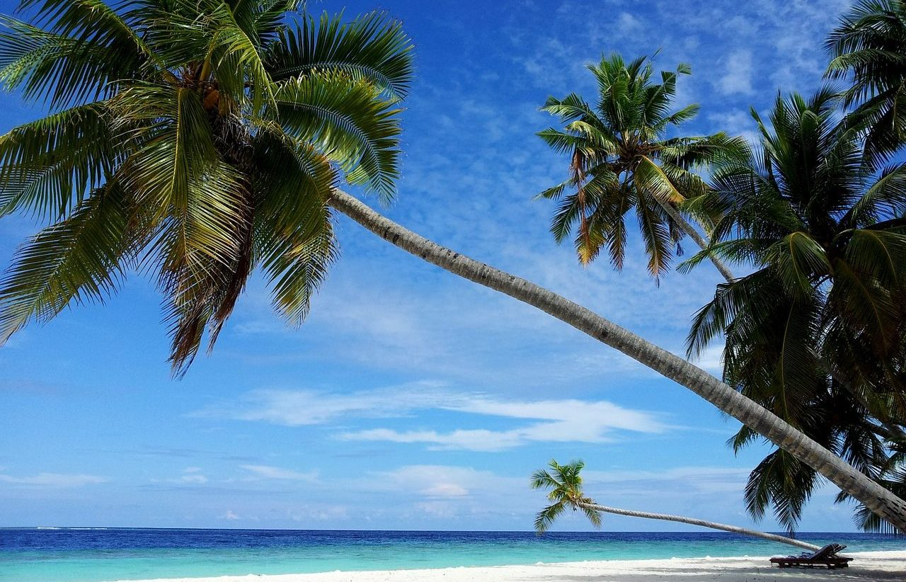 Maldives, Beach, Palm Trees, Island, Sea, Singles Holidays, Solo Travel, Singles Vacations, Individual Travel (Image: Berniefant, Pixabay)