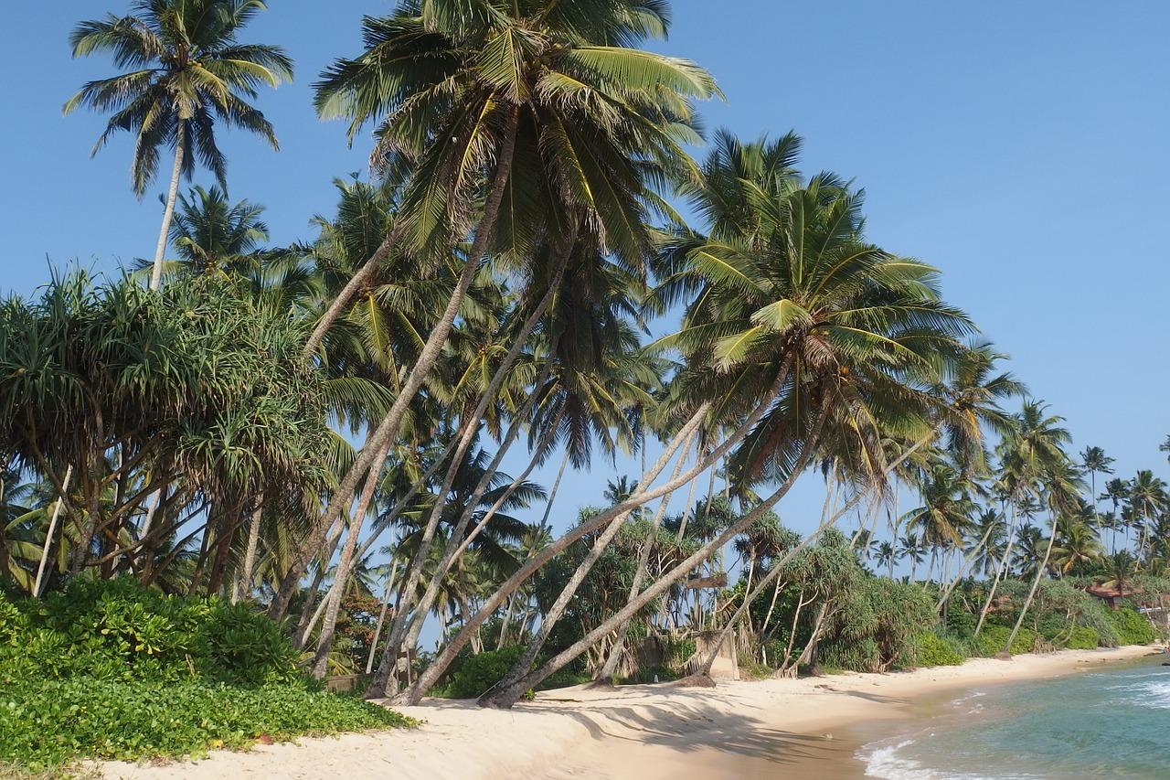 Singlereisen Sri Lanka (Bild: Pixabay)