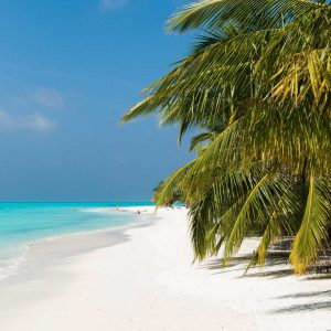 Palmenstrand © Meeru Island Resort & Spa
