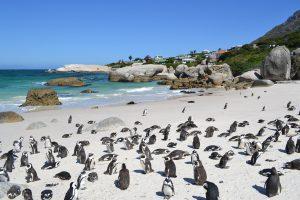Südafrika Reise für Alleinreisende