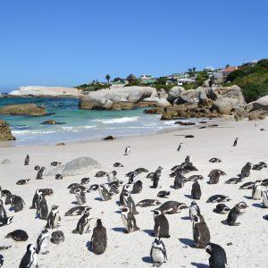 Südafrika, Kapstadt, Strand, Pinguine
