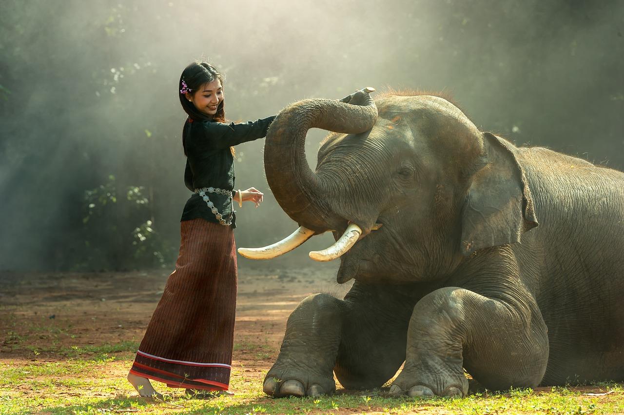 Thailand, Ayutthaya, Elefant, Mädchen