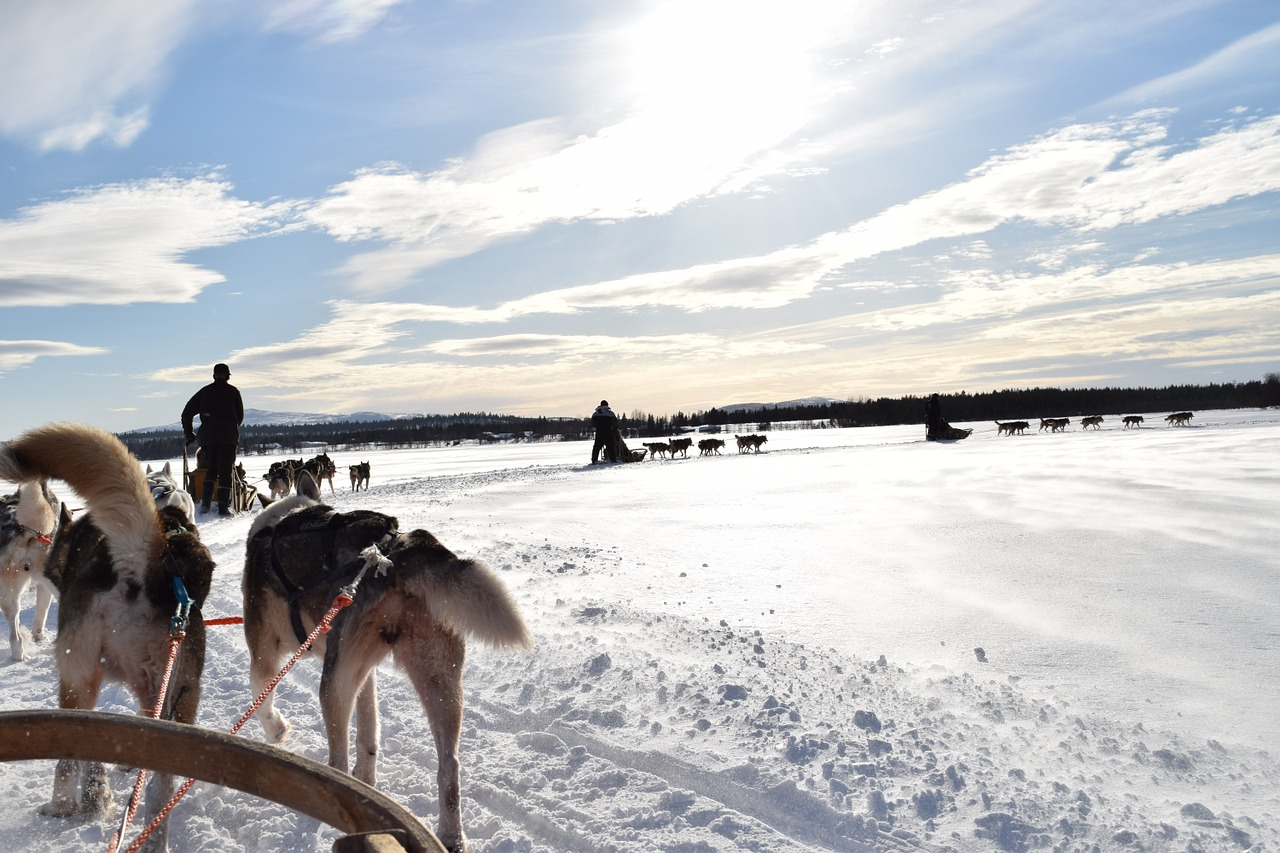 Lappland, Husky, Schlittenfahrt, Winter