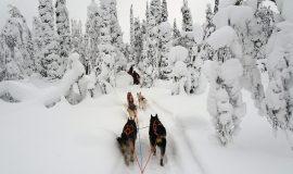 Lappland, Husky, Schlitten, Winter