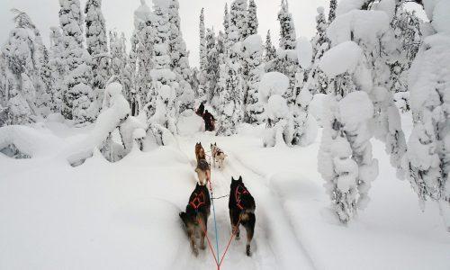 Lappland, Husky, Schlitten, Winter, Singlereisen, Reisen für Alleinreisende