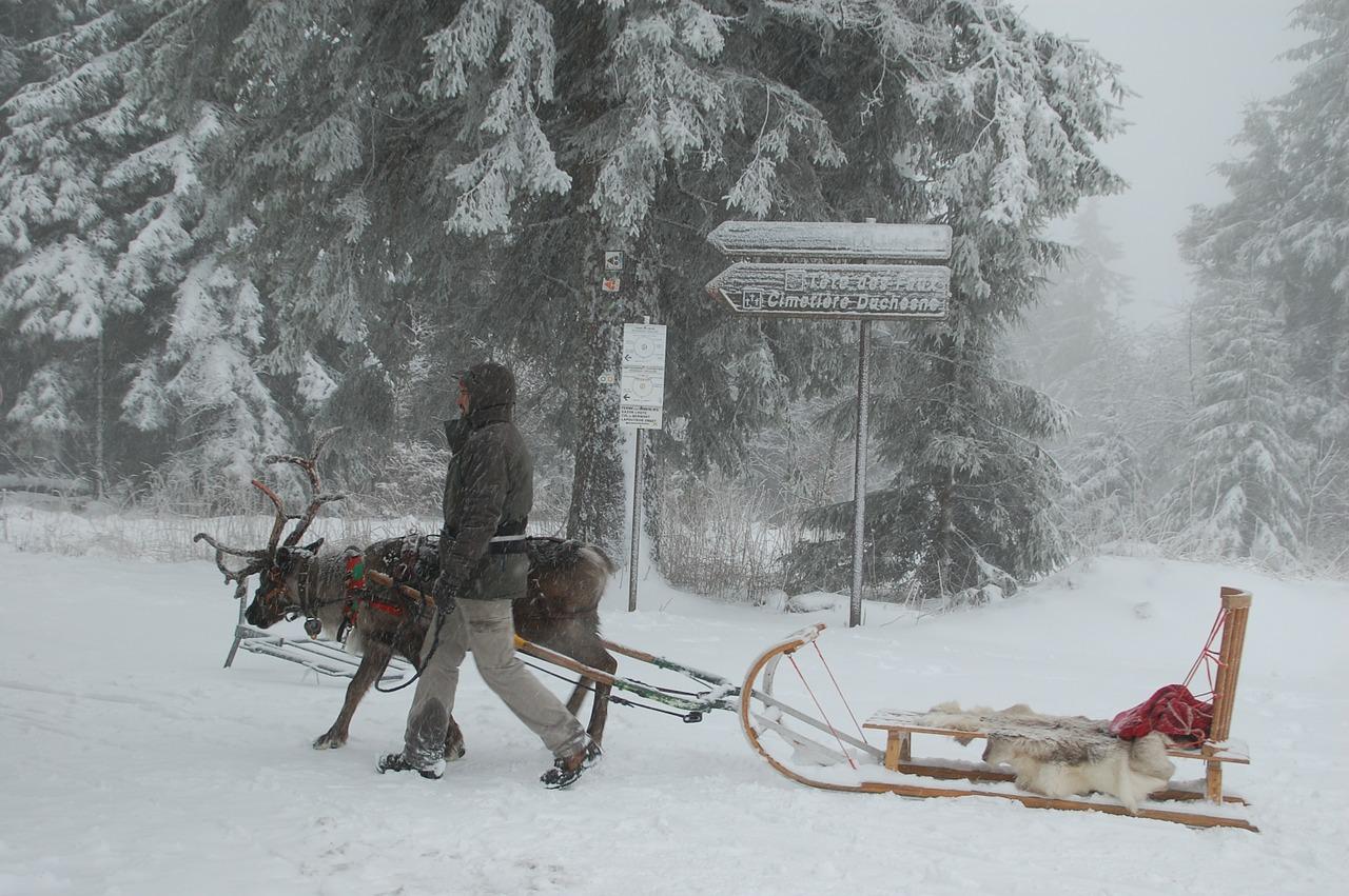 Rentier, Schnee, Winter, Weihnachten