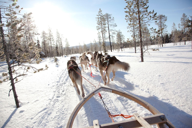 Huskys Finnland, Lappland (Bild © Kakslauttanen Arctic Resort)