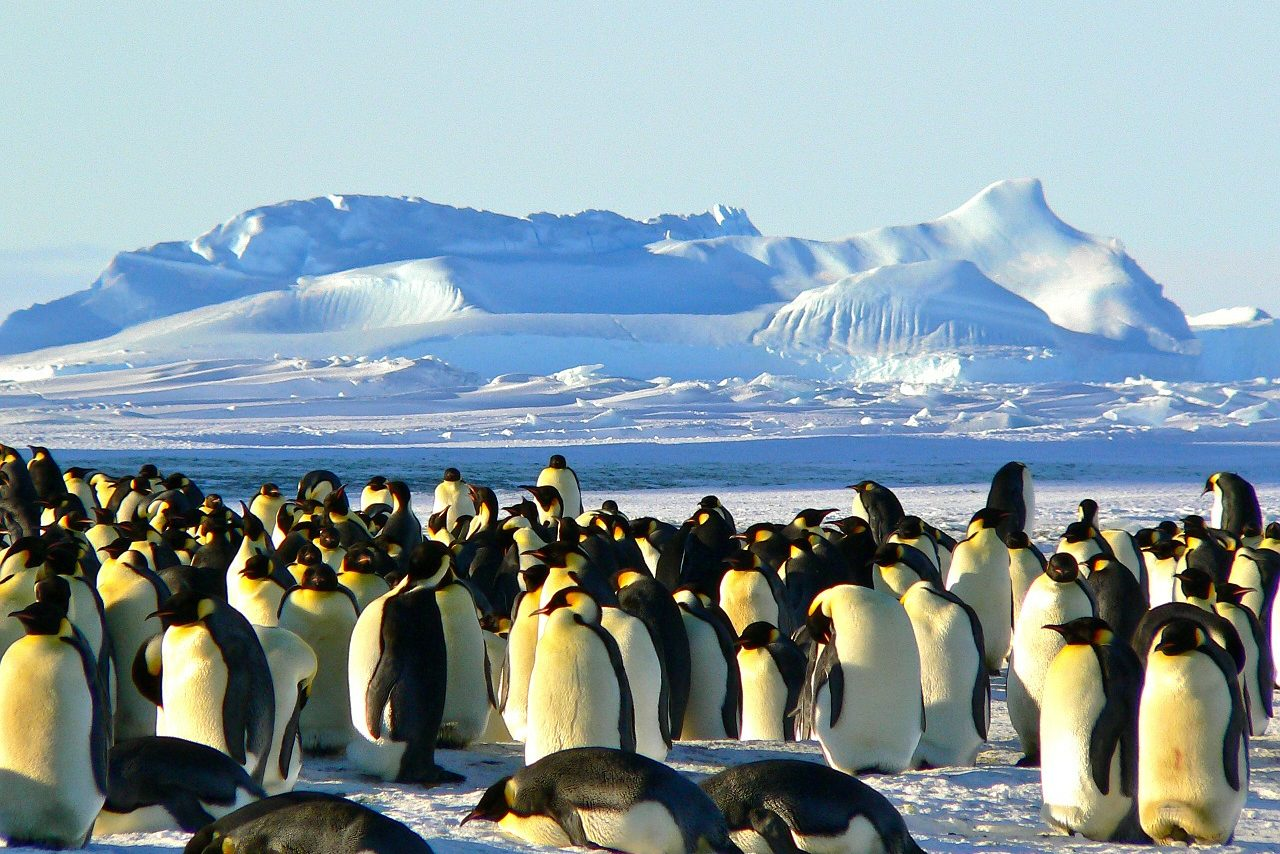Antarctic, Penguins, Winter, Snow, Singles Holidays, Solo Travel, Singles Vacations (Image: xx, Pixabay)