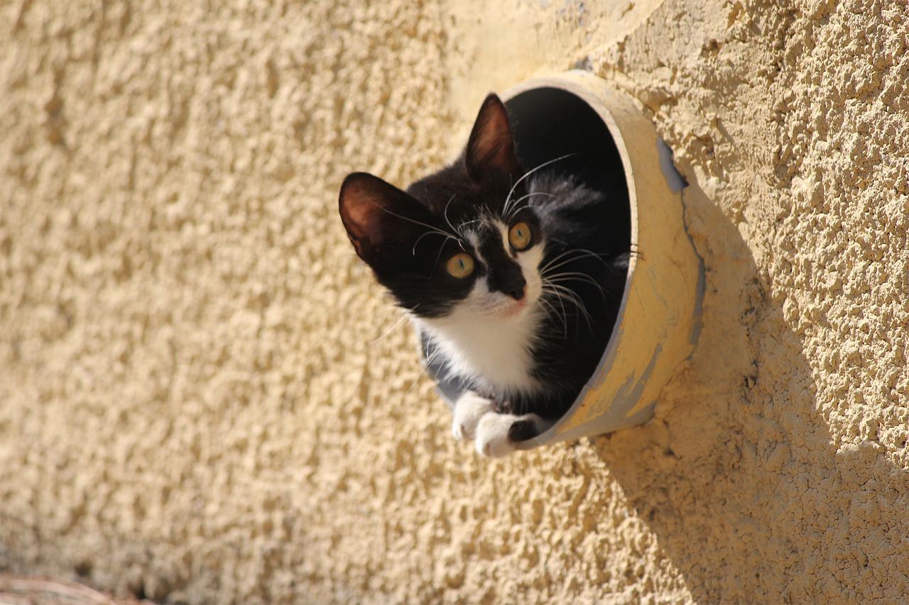 Griechenland, Katze