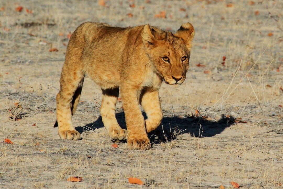 Namibia, Afrika