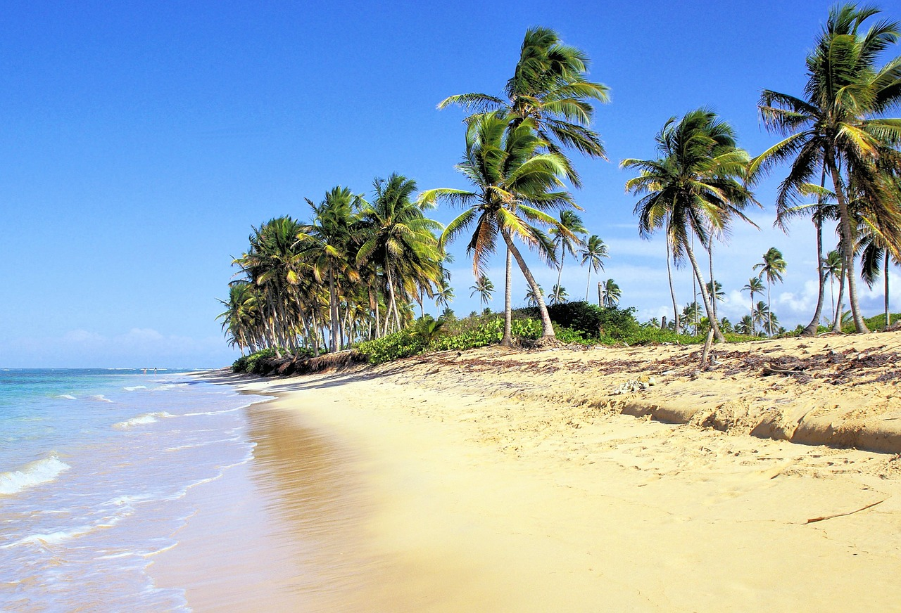 Dominican Republic, Beach, Palm Trees, Caribbean