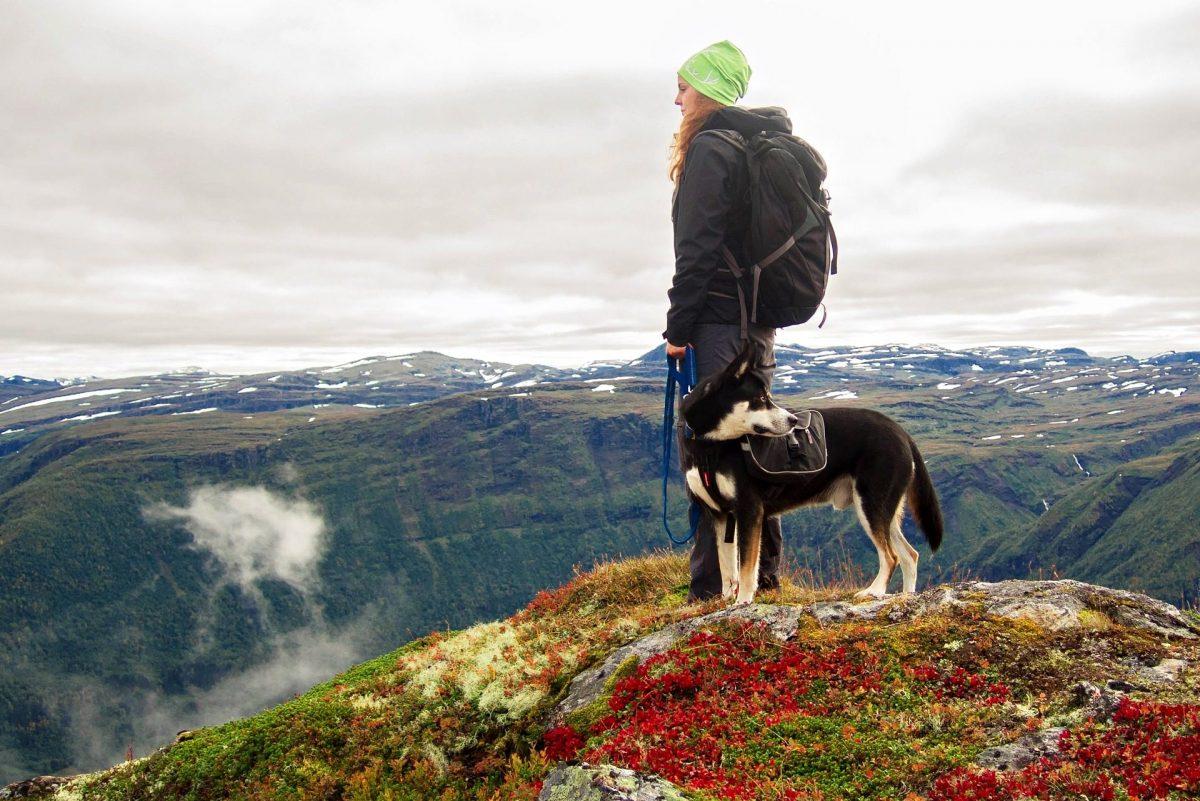 Norwegen – Norway, Reisende, Hund, Wandern, Alleinreisende, Urlaub mit Hund