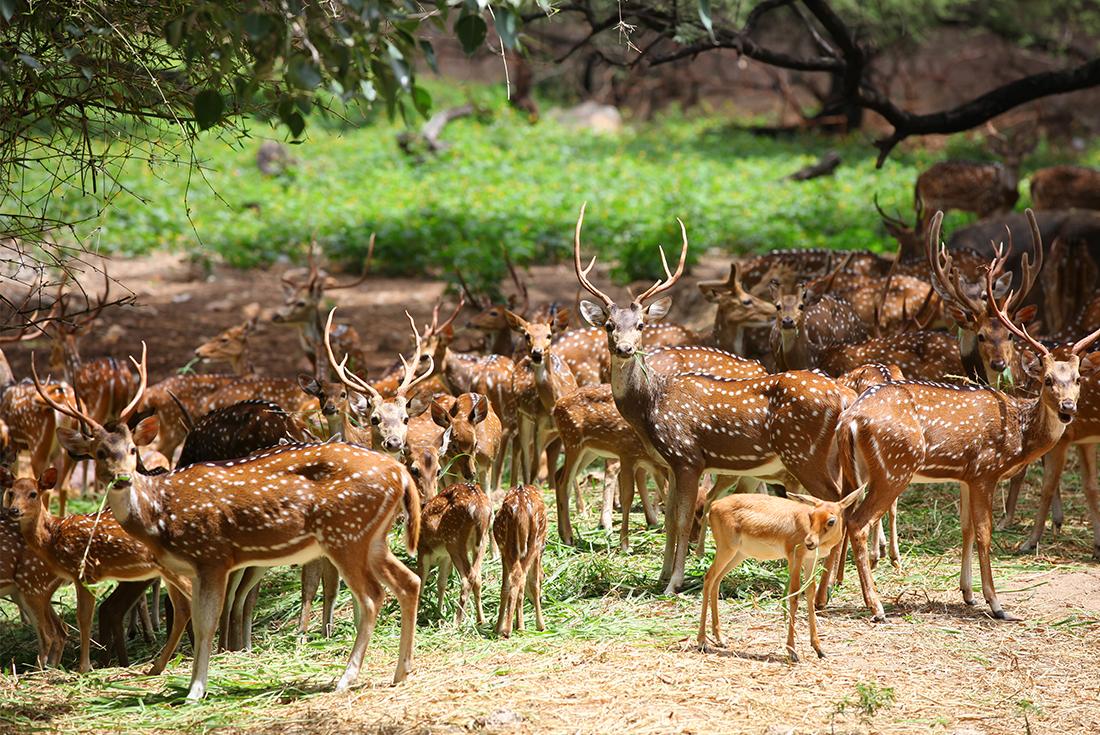 Sri Lanka Expedition: Wilderness & Wildlife - Sri Lanka Tour (Image Credit: Intrepid Travel)